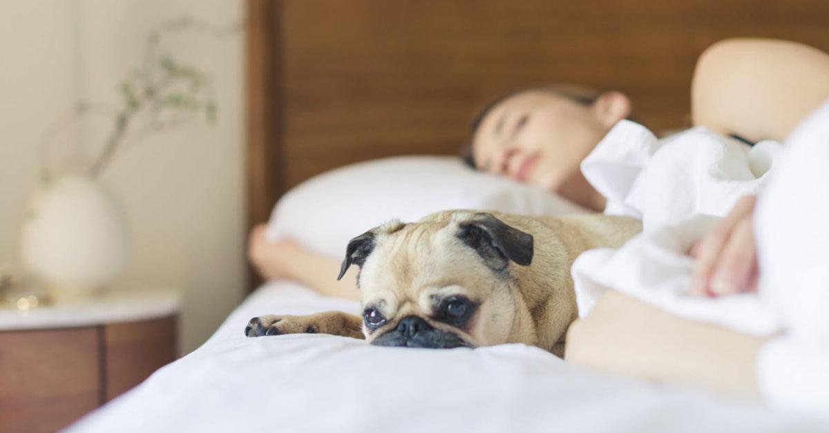 Cancro dormire cane 3