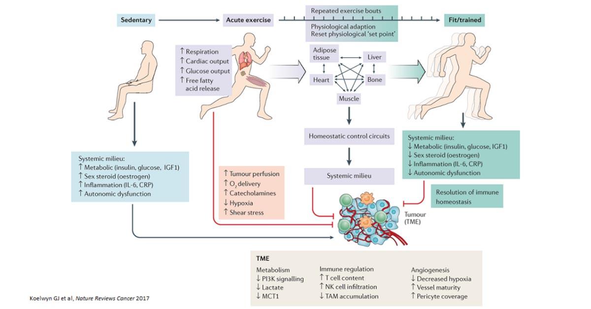 esercizio fisico modificare il microambiente tumorale 3